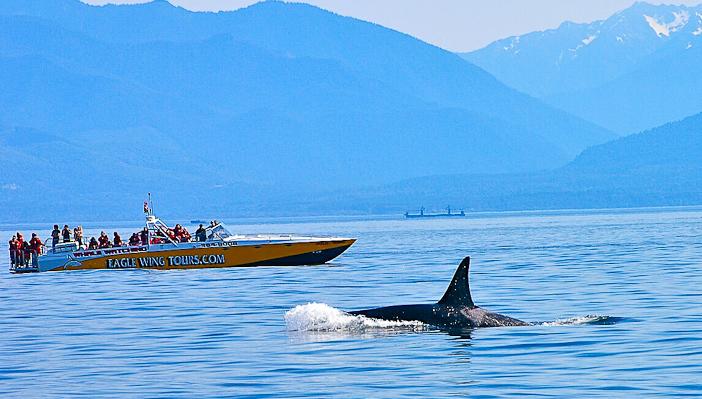 Photo courtesy www.eaglewingtours.com