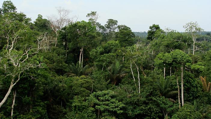 Rainforest_canopy