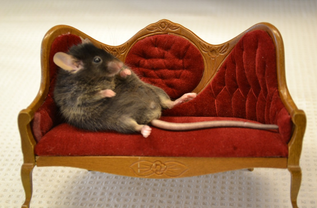 couchmouse