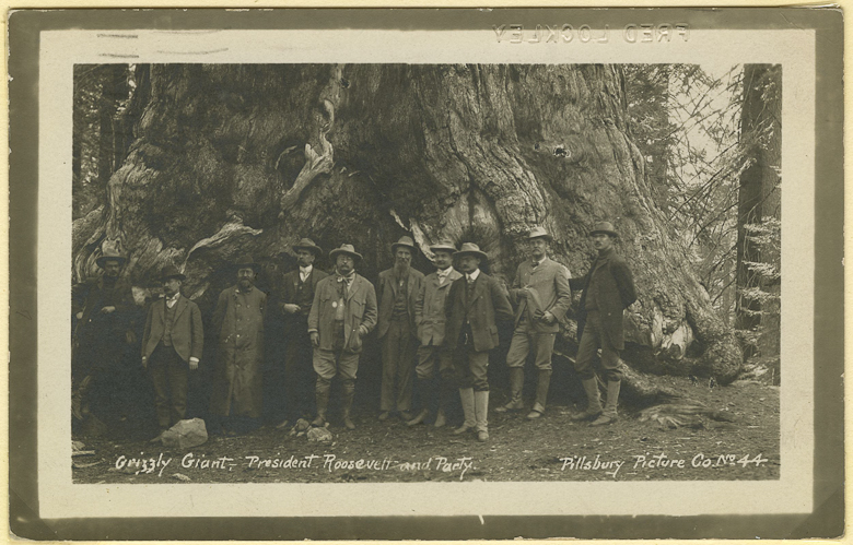 "John Muir with President Theodore Roosevelt circa 1903 in front of ""Grizzly Giant"", a sequoia in Mariposa Grove, Yosemite National Park, California. Theodore Roosevelt Digital Library Dickinson State University."