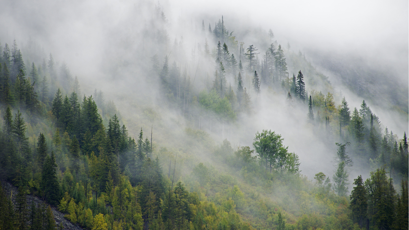 Near Jumbo Pass in fall; photo taken on the Glacier Creek side (West Kootenay)