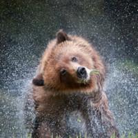 GrizzlyThumb