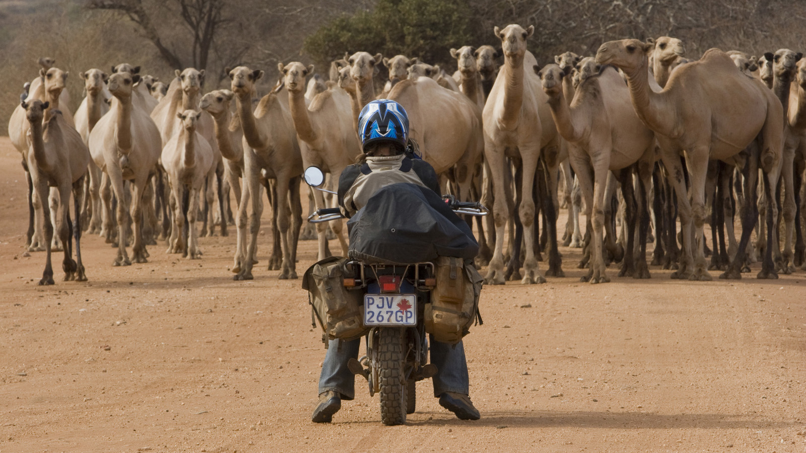 The great camel encounter_Northern Kenya