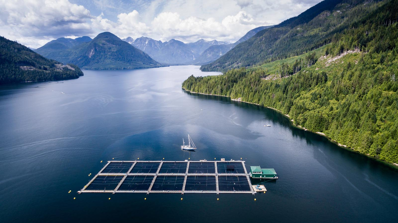 Something fishy open net fish farms are destroying bc s wild salmon populations mountain life - Trout farming business family mountains ...