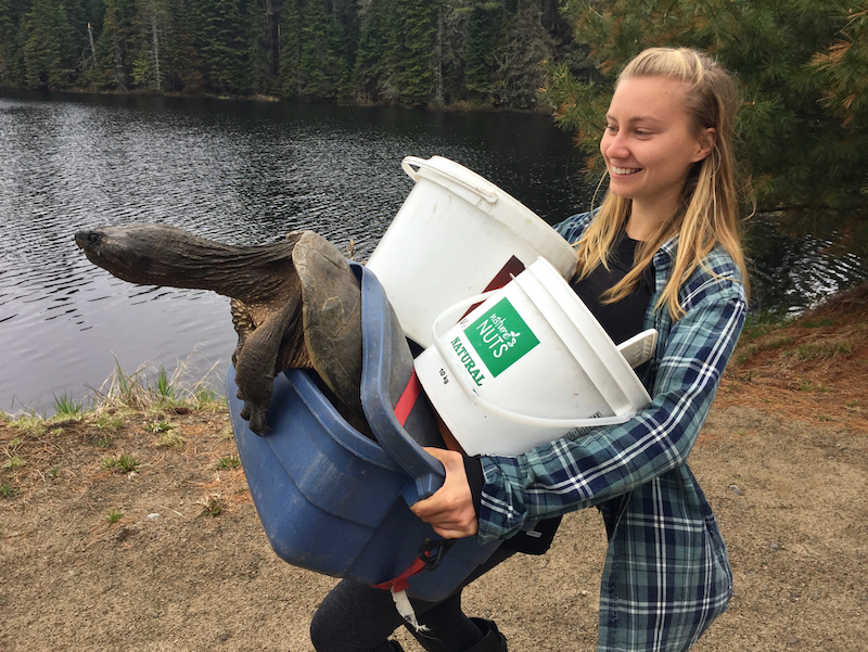 Where-the-Wild-Things-Are-student-carrying-snapping-turtle-Leslie-Anthony