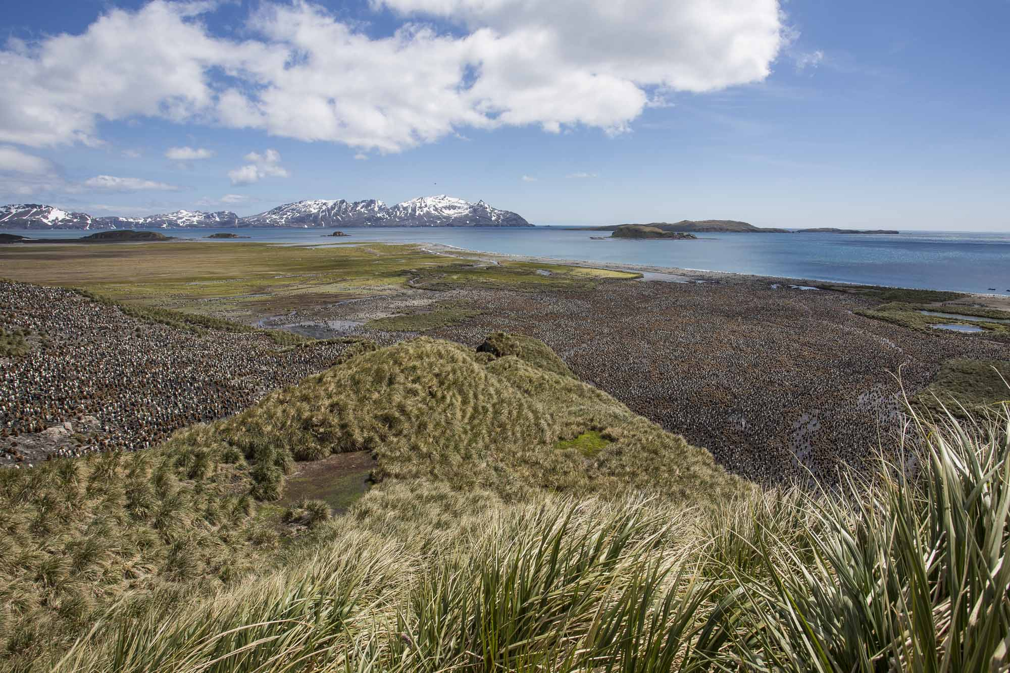 Island-of-Life-Restoring-and-Reclaiming-One-of-Earths-Most-Untamed-Places-photo-by-Ben-Haggar-penguins-below