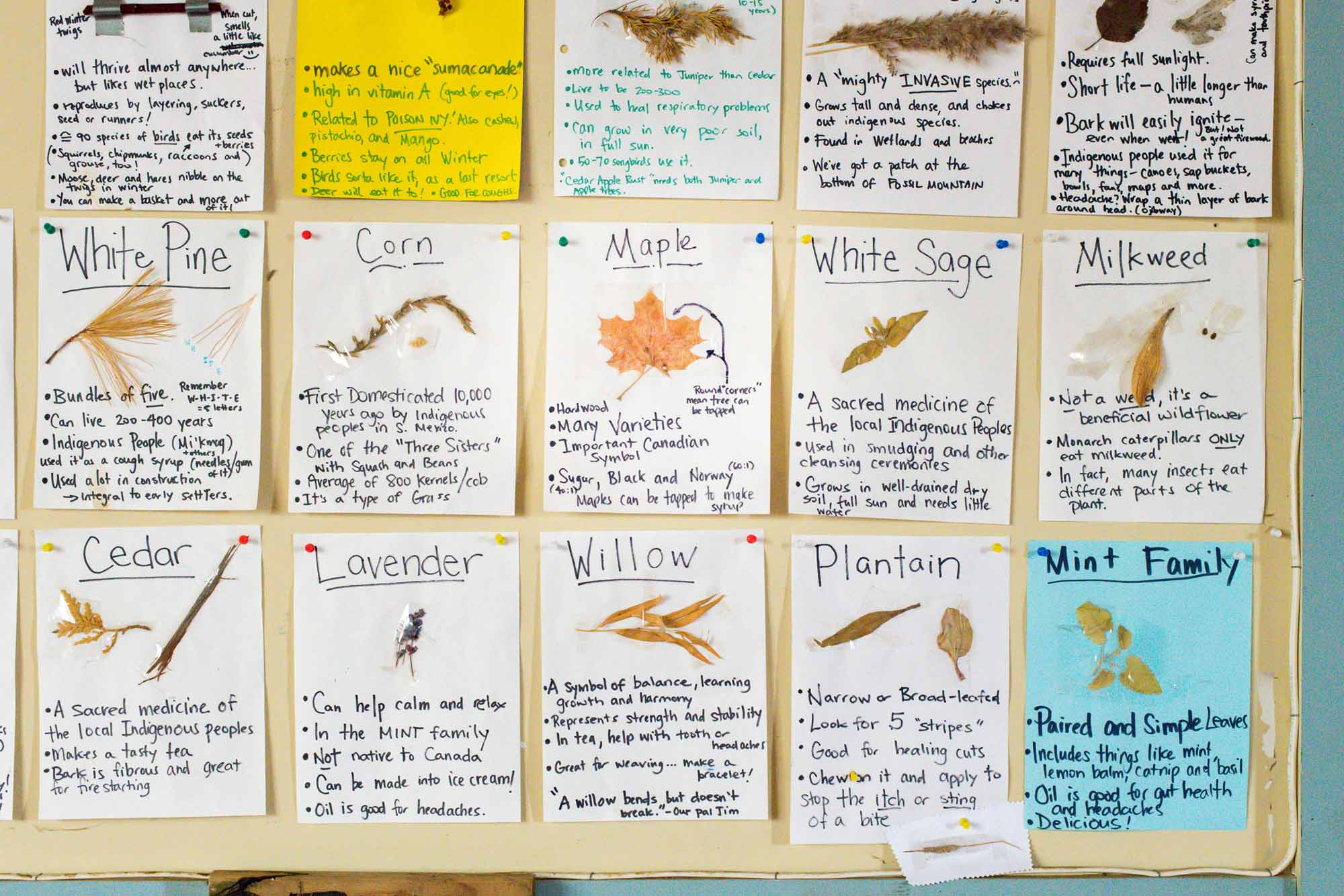 Nature-as-Teacher-Outdoor-Schools-Bring-Learning-Into-the-Elements-photo-by-Kristin-Schnelten-information-board