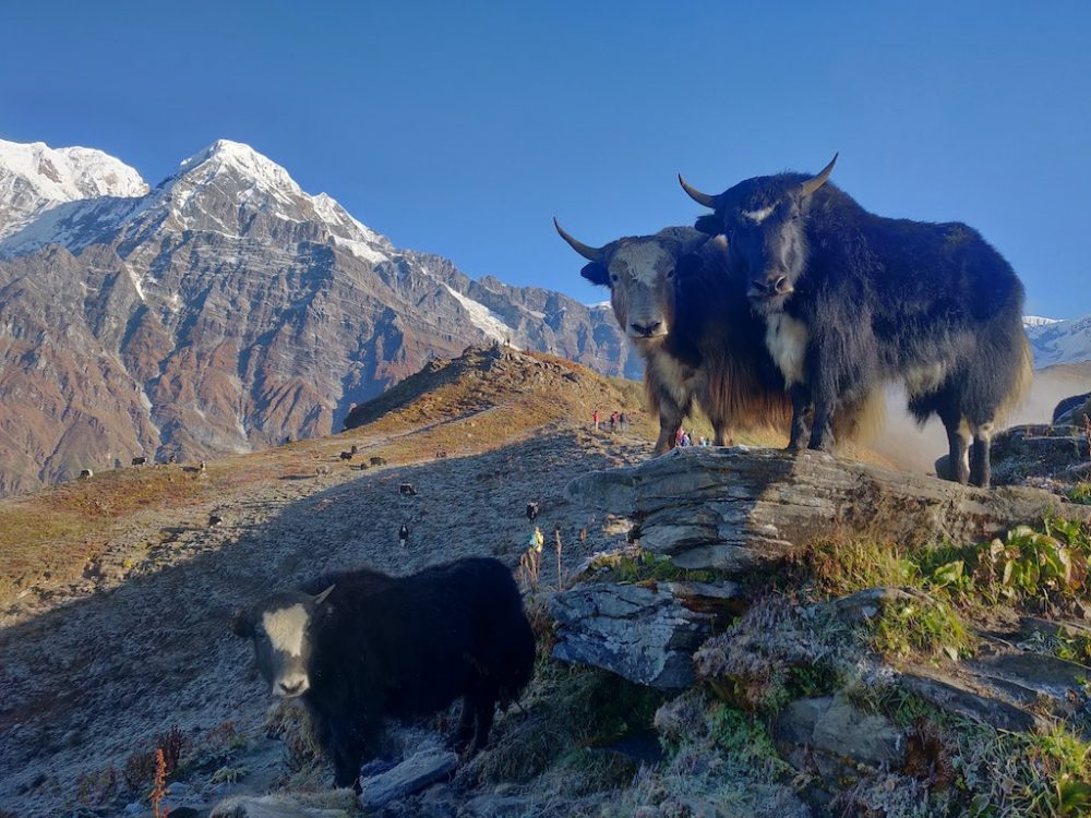 Mardi-Himal-Base-Camp-Lumle-Nepal-photo-by-Sanjay-Hona-Unsplash